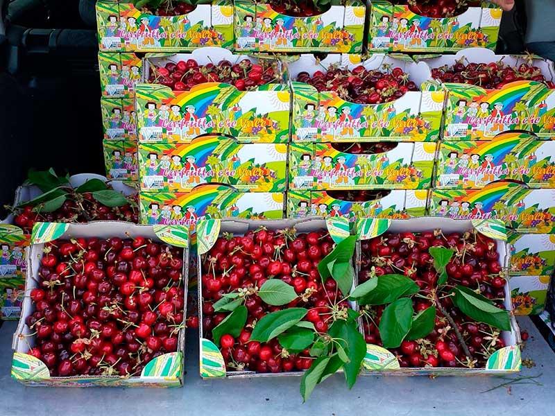 La raccolta delle ciliegie